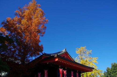 高幡不動201112-3