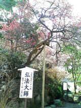 高幡不動2/16-春