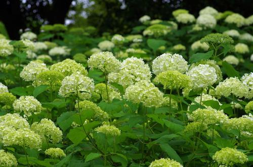 昭和記念公園201106-14