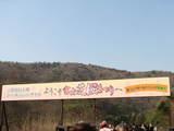 富士芝桜入口看板