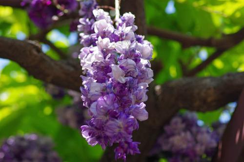 神代植物公園201305-13