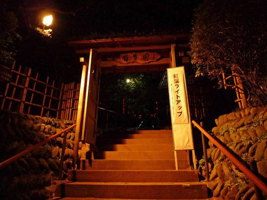 百草園紅葉ライトアップ-9