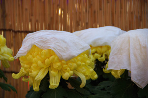 高幡不動201211-15