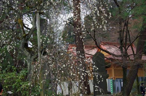 高幡不動201102-9