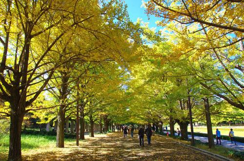 昭和記念公園201411-6