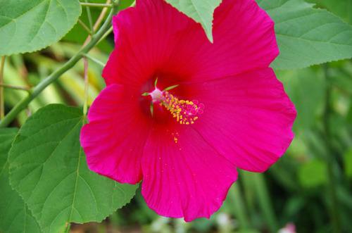 散歩道の夏の花-8