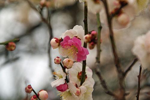 高幡不動尊20100227-6