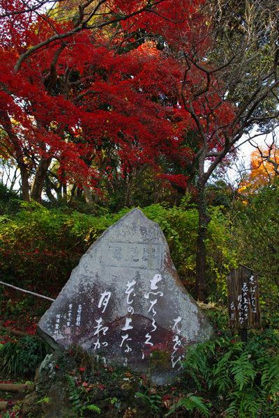 百草園の紅葉-12