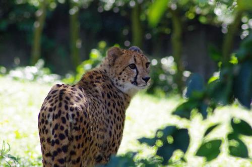 多摩動物公園201109-3