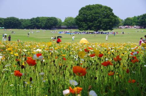 昭和記念公園201105-15