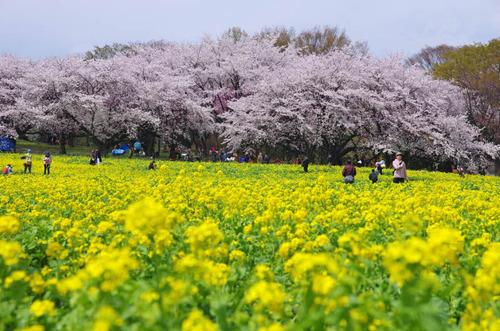 昭和記念公園201405-1