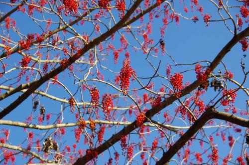 昭和記念公園201112-4