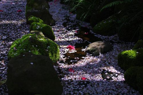 高幡不動尊201004-9