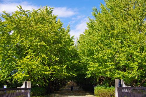 昭和記念公園201210-13