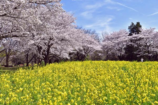 昭和記念公園201704