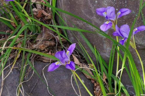 京王百草園201101-6