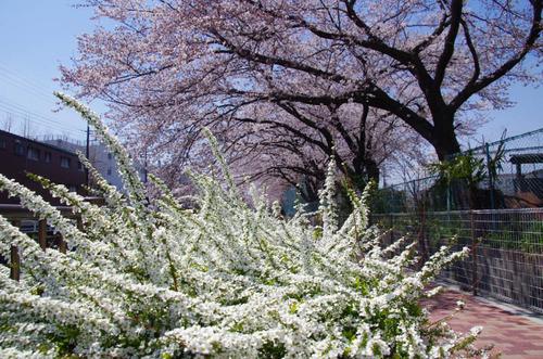 春の明るさ2012-10