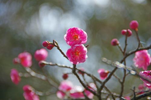 京王百草園20120303-10