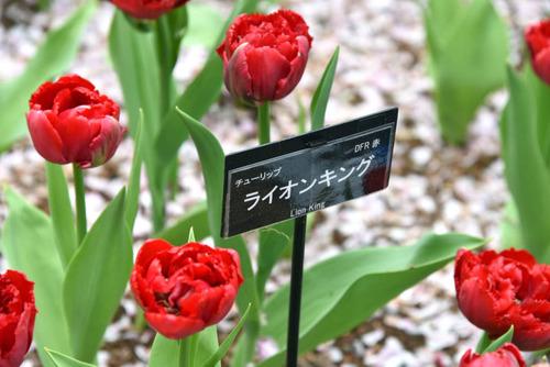 昭和記念公園201504-3