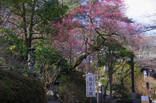 高幡不動201203-2