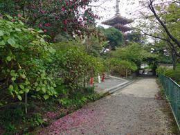 高幡不動尊20091024-6