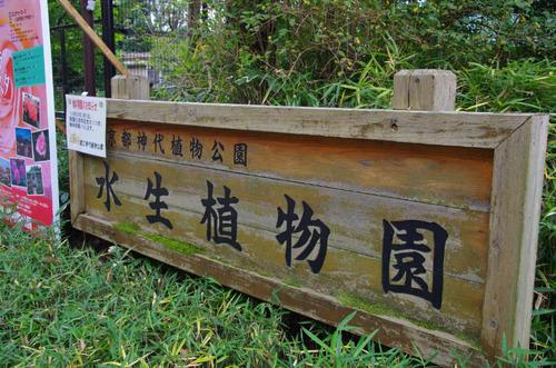 深大寺201110-11
