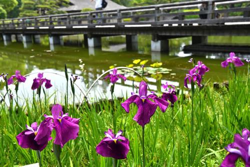 昭和記念公園201605-14