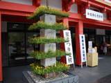 菊祭り準備中-9