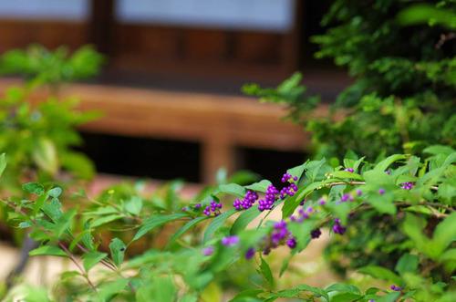 京王百草園201309-7