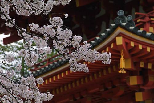高幡不動尊桜201004-6