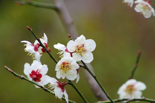 京王百草園201203-12