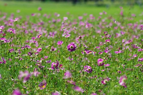 昭和記念公園201109-5