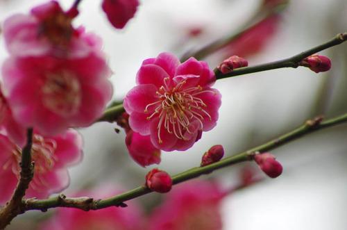 京王百草園201203-13