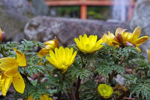 高幡不動尊20100227-8