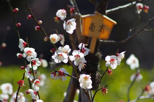 京王百草園201103-10
