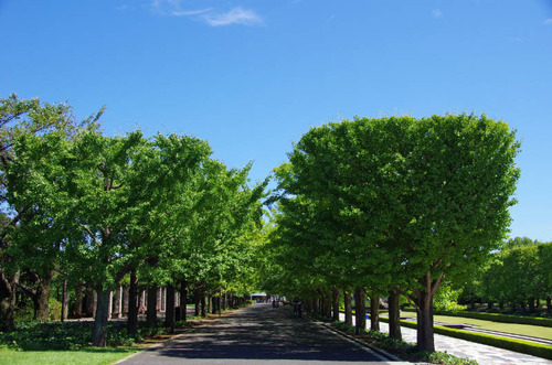 昭和記念公園201109-15