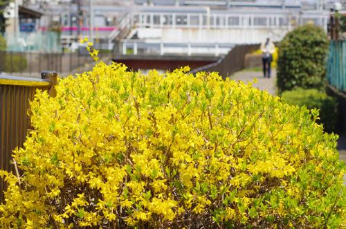 春の明るさ2012-8