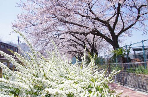 春の明るさ2012-9
