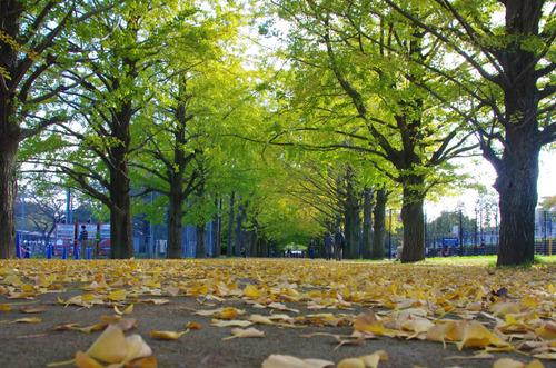 昭和記念公園201411-10