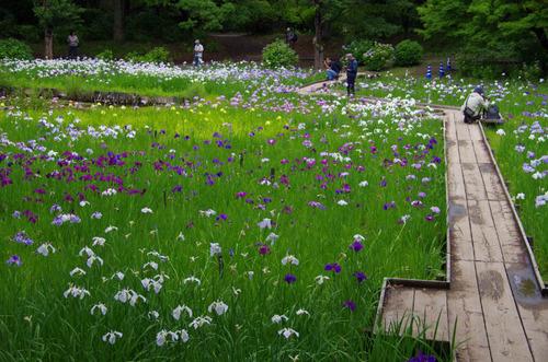 昭和記念公園201206-1