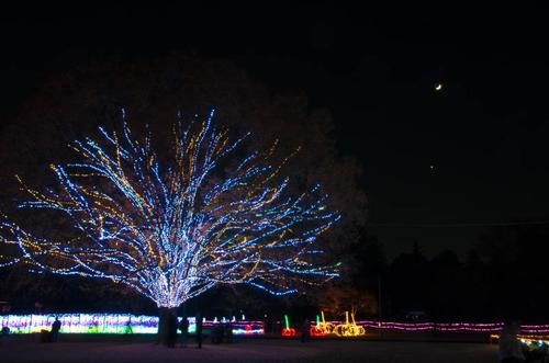昭和記念公園201312-11