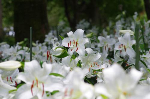 昭和記念公園201207-8