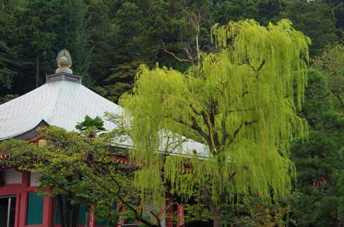 高幡不動201109-10