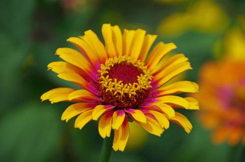 散歩道の夏の花-6