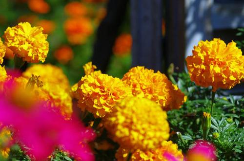 昭和記念公園201310-1