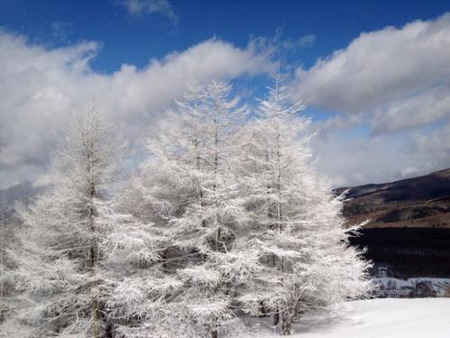 白樺スキー201202-2