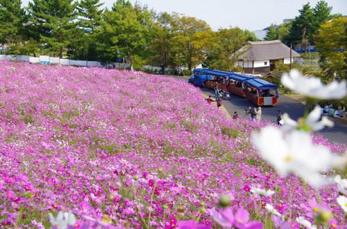 昭和記念公園201211-9