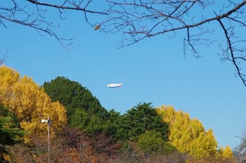 新宿御苑201312-8