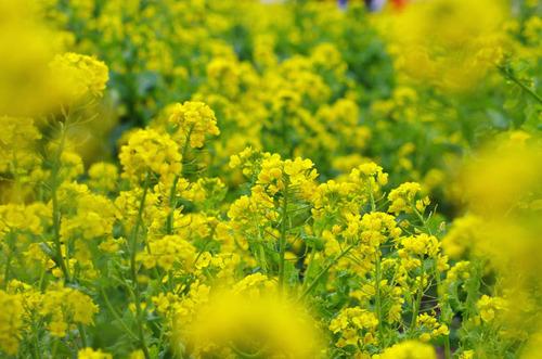 昭和記念公園201204-4