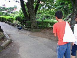 伊豆シャボテン公園1-16